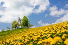 Simon Benedičič - Na vrhu rumenih travnikov