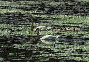 Pomladanski fotolov – Rački ribniki in Ptuj (rezultati razpisa)