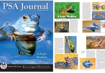 """Žabja svatba"" v reviji PSA Journal"